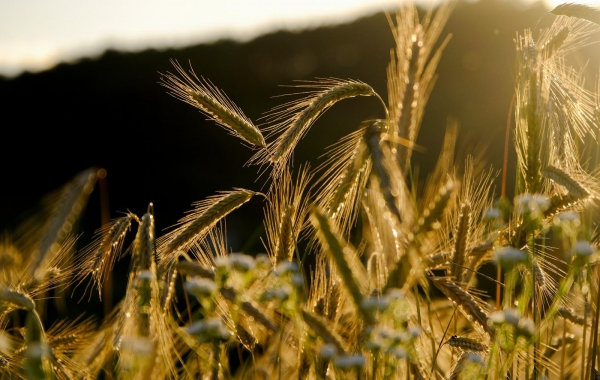 Agronomická evidence a zpracování bilance dusíku